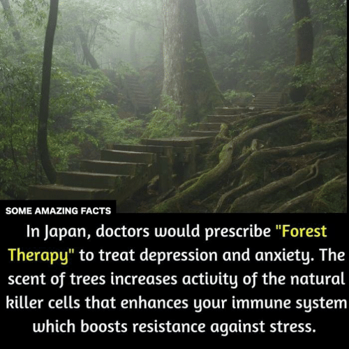 """Facts, Memes, and Anxiety: SOME AMAZING FACTS  In Japan, doctors would prescribe """"Forest  Therapy"""" to treat depression and anxiety. The  scent of trees increases activity of the natural  killer cells that enhances your immune system  which boosts resistance against stress."""