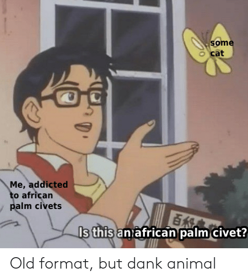 Dank, Addicted, and Animal: some  cat  Me, addicted  to african  palm civets  Is this anafrican palm civet? Old format, but dank animal