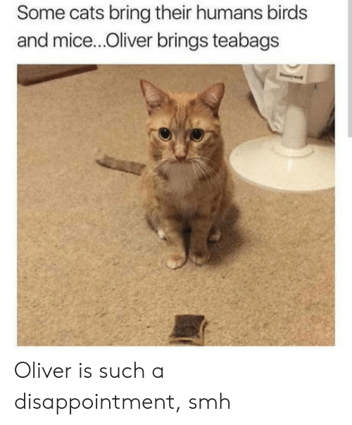 Cats, Smh, and Birds: Some cats bring their humans birds  and mice...Oliver brings teabags Oliver is such a disappointment, smh