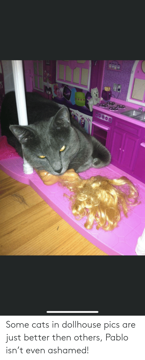 pablo: Some cats in dollhouse pics are just better then others, Pablo isn't even ashamed!