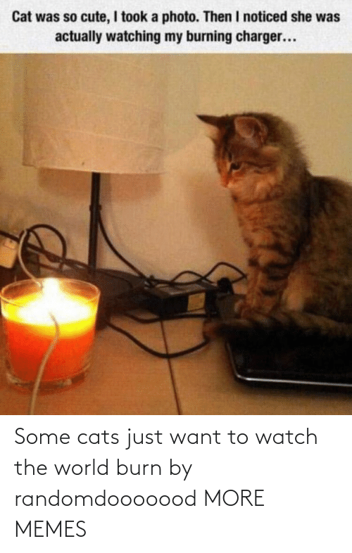 want: Some cats just want to watch the world burn by randomdooooood MORE MEMES