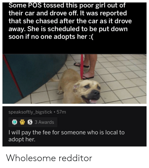 Soon..., Girl, and Wholesome: Some POS tossed this poor girl out of  their car and drove off. It was reported  that she chased after the car as it drove  away. She is scheduled to be put down  soon if no one adopts her :  speaksoftly_bigstick 57m  S3 Awards  I will pay the fee for someone who is local to  adopt her. Wholesome redditor