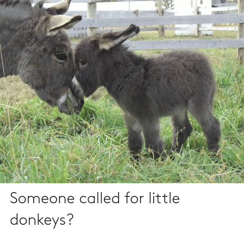 called: Someone called for little donkeys?