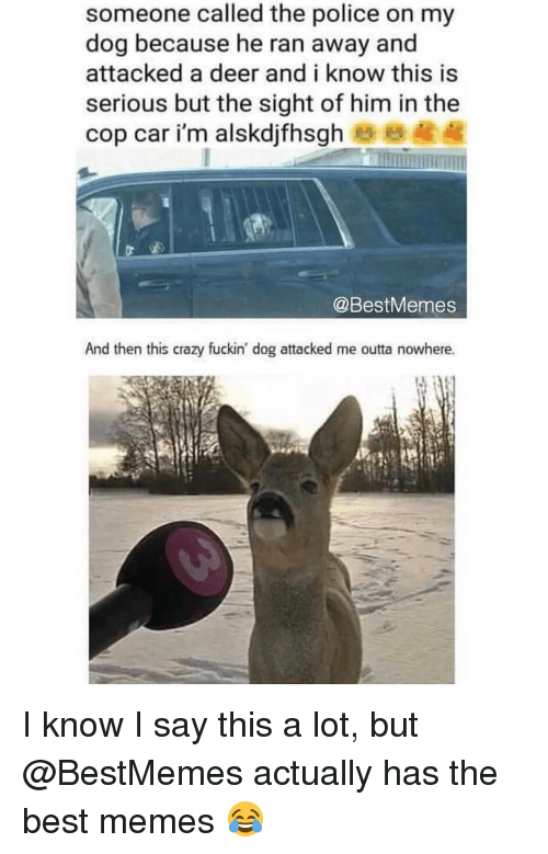 Crazy, Deer, and Memes: someone called the police on my  dog because he ran away and  attacked a deer and i know this is  serious but the sight of him in the  cop car i'm alskdjfhsgh  @BestMemes  And then this crazy fuckin' dog attacked me outta nowhere. I know I say this a lot, but @BestMemes actually has the best memes 😂
