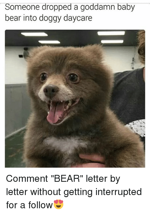 """baby bear: Someone dropped a goddamn baby  bear into doggy daycare Comment """"BEAR"""" letter by letter without getting interrupted for a follow😍"""