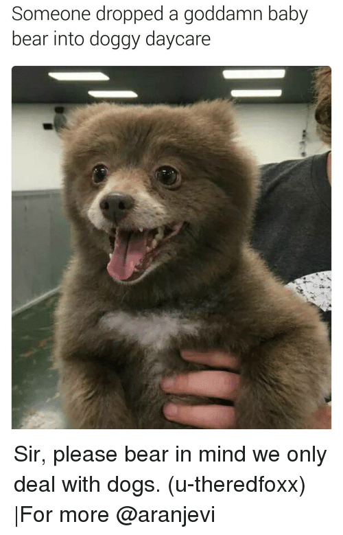 baby bear: Someone dropped a goddamn baby  bear into doggy daycare Sir, please bear in mind we only deal with dogs. (u-theredfoxx) |For more @aranjevi