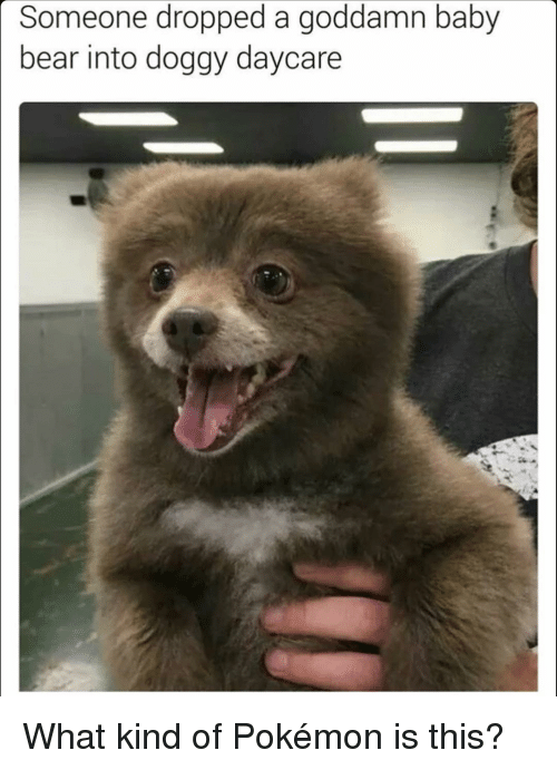 baby bear: Someone dropped a goddamn baby  bear into doggy daycare What kind of Pokémon is this?