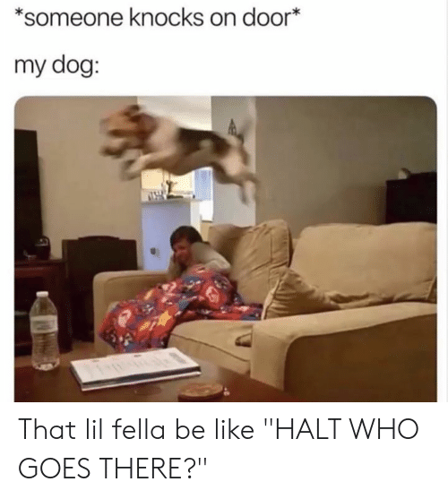 """Be Like, Dank, and Fella: *someone knocks on door  my dog: That lil fella be like """"HALT WHO GOES THERE?"""""""