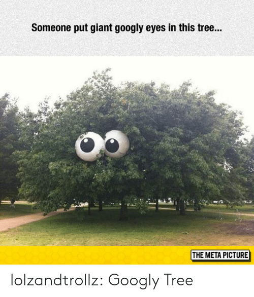 tre: Someone put giant googly eyes in this tre...  THE META PICTURE lolzandtrollz:  Googly Tree