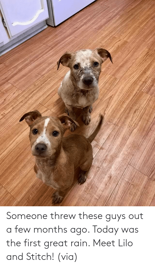 Meet: Someone threw these guys out a few months ago. Today was the first great rain. Meet Lilo and Stitch! (via)