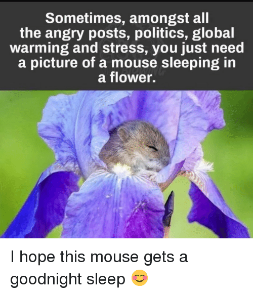Global Warming, Politics, and Flower: Sometimes, amongst all  the angry posts, politics, global  warming and stress, you just need  a picture of a mouse sleeping in  a flower. I hope this mouse gets a goodnight sleep 😊