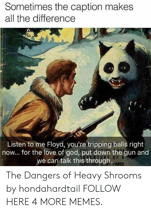 shrooms: Sometimes the caption makes  all the difference  Zo.  6  Listen to me Floyd, you're tripping balls right  now... for the love of god, put down the gun and  we can talk this through  PANDA The Dangers of Heavy Shrooms by hondahardtail FOLLOW HERE 4 MORE MEMES.