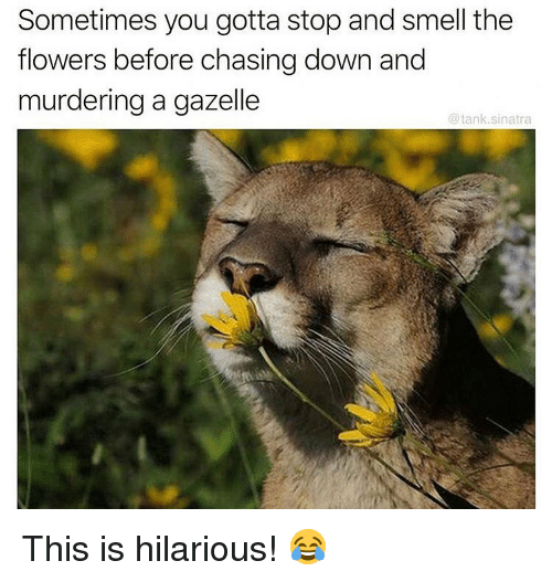 Memes, Smell, and Flowers: Sometimes you gotta stop and smell the  flowers before chasing down and  murdering a gazelle  @tank.sinatra This is hilarious! 😂