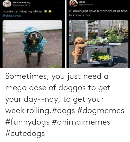 You Just: Sometimes, you just need a mega dose of doggos to get your day--nay, to get your week rolling.#dogs #dogmemes #funnydogs #animalmemes #cutedogs