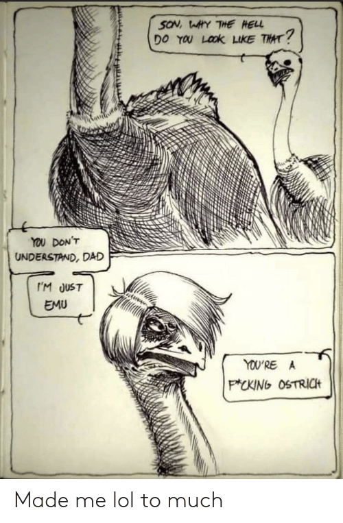 The Hell: SON, WAHY THE HELL  DO YOU LOOK LIKE THAT?  YOU DON'T  UNDERSTAND, DAD  I'M JUST  EMU  YOU'RE A  P*CKING OSTRICH Made me lol to much