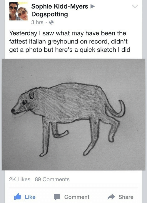 fattest: Sophie Kidd-Myers  Dogspotting  3 hrs  Yesterday I saw what may have been the  fattest italian greyhound on record, didn't  get a photo but here's a quick sketch I dicd  2K Likes 89 Comments  Like Comment  Share