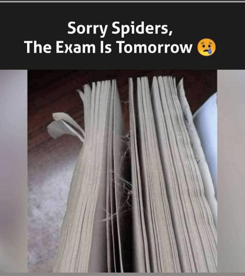 exam: Sorry Spiders,  The Exam Is Tomorrow