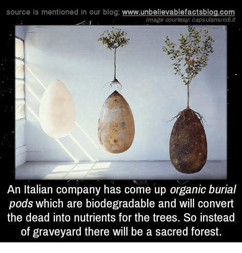 Convertable: source Is mentioned In our blog  www.unbelievablefactsblog.com  image courtesy: capsulamundiit  An Italian company has come up organic burial  pods which are biodegradable and will convert  the dead into nutrients for the trees. So instead  of graveyard there will be a sacred forest.