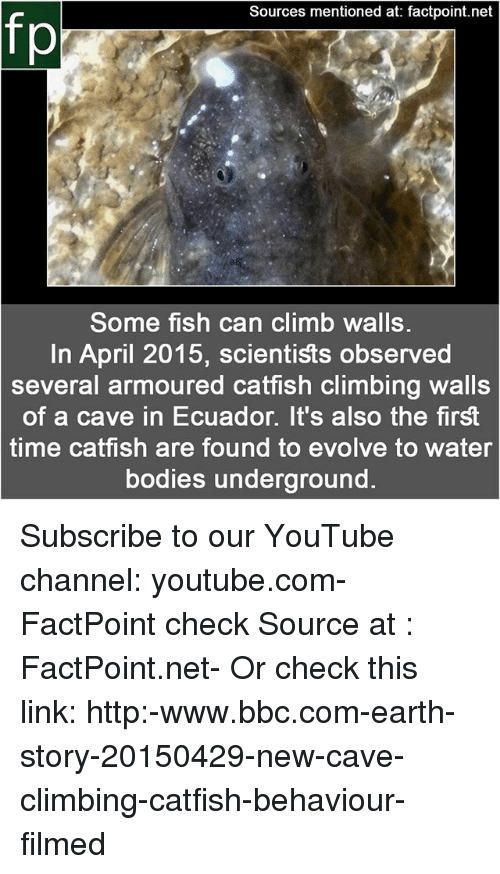 Bodies , Catfished, and Climbing: Sources mentioned at: factpoint.net  fp  Some fish can climb walls  In April 2015, scientists observed  several armoured catfish climbing walls  of a cave in Ecuador. It's also the first  time catfish are found to evolve to water  bodies underground. Subscribe to our YouTube channel: youtube.com-FactPoint check Source at : FactPoint.net- Or check this link: http:-www.bbc.com-earth-story-20150429-new-cave-climbing-catfish-behaviour-filmed