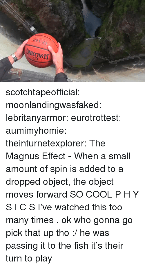 Target, Tumblr, and Blog: SPALDING  150 scotchtapeofficial: moonlandingwasfaked:   lebritanyarmor:  eurotrottest:   aumimyhomie:    theinturnetexplorer:    The Magnus Effect - When a small amount of spin is added to a dropped object, the object moves forward   SO COOL   P H Y S I C S   I've watched this too many times .   ok who gonna go pick that up tho :/   he was passing it to the fish it's their turn to play