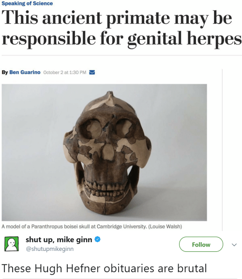Brutal: Speaking of Science  This ancient primate may be  responsible for genital herpes  By Ben Guarino October 2 at 1:30 PM  A model of a Paranthropus boisei skull at Cambridge University. (Lou ise Walsh)   shut up, mike ginn  Follow  @shutupmikeginn  These Hugh Hefner obituaries are brutal