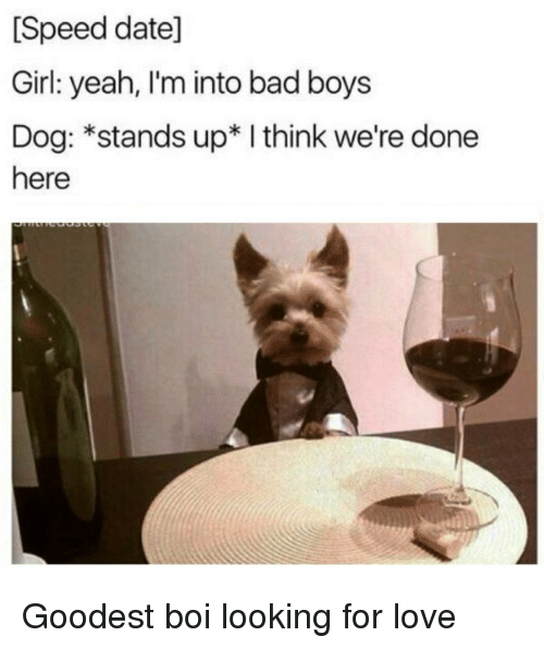 Bad, Bad Boys, and Love: [Speed date]  Girl: yeah, I'm into bad boys  Dog: *stands up* I think we're done  here Goodest boi looking for love