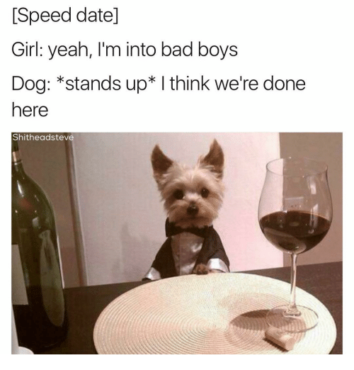 Bad, Bad Boys, and Girls: Speed datel  Girl: yeah, I'm into bad boys  Dog: *stands up I think we're done  here  Shitheadsteve