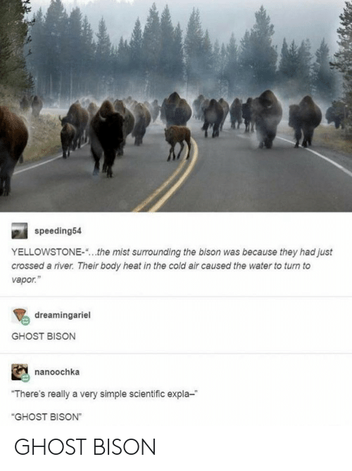 "mist: speeding54  YELLOWSTONE-  the mist surrounding the bison was because they had just  crossed a river. Their body heat in the cold air caused the water to turn to  vapor.""  dreamingariel  GHOST BISON  nanoochka  ""There's really a very simple scientific expla-  ""GHOST BISON"" GHOST BISON"