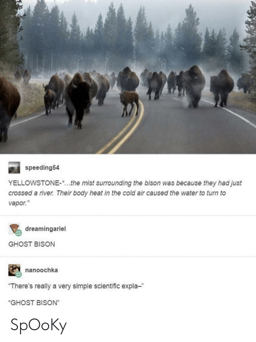 "mist: speeding54  YELLOWSTONE-""...the mist surrounding the bison was because they had just  crossed a river. Their body heat in the cold air caused the water to turn to  vapor.""  dreamingariel  GHOST BISON  nanoochka  ""There's really a very simple scientific expla-  ""GHOST BISON"" SpOoKy"