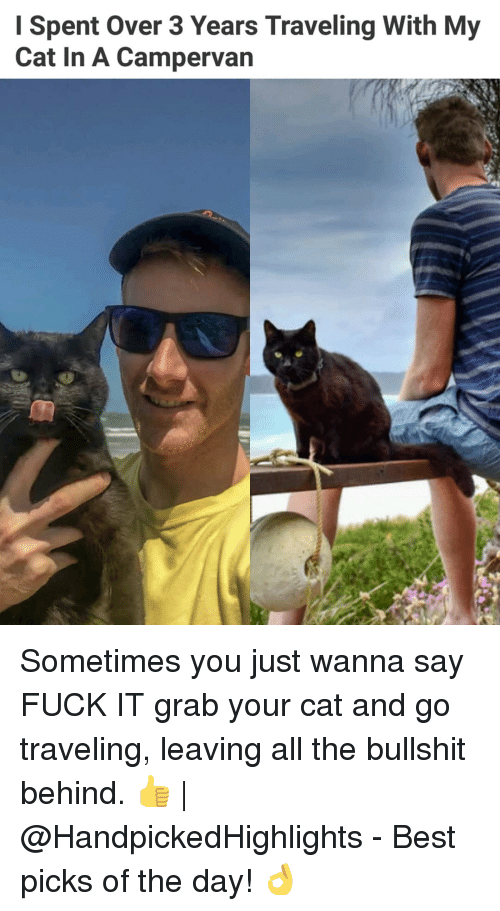 Memes, Best, and Fuck: Spent Over 3 Years Traveling With My  Cat In A Campervan Sometimes you just wanna say FUCK IT grab your cat and go traveling, leaving all the bullshit behind. 👍   @HandpickedHighlights - Best picks of the day! 👌