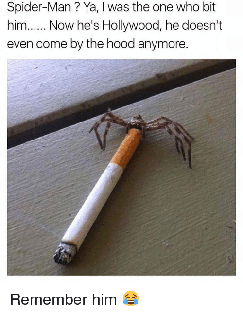 Memes, Spider, and SpiderMan: Spider-Man? Ya, I was the one who bit  him.Now he's Hollywood, he doesn't  even come by the hood anymore. Remember him 😂