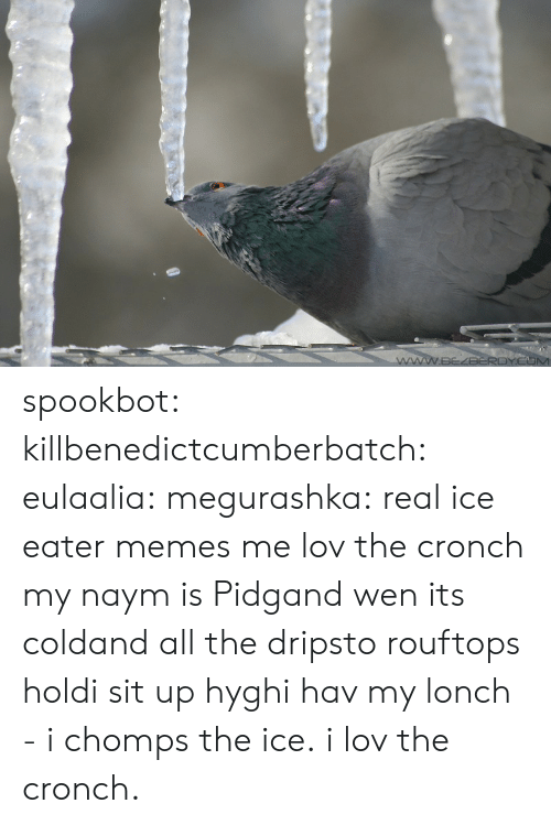 sit up: spookbot:  killbenedictcumberbatch:  eulaalia:  megurashka: real ice eater memes me  lov the cronch  my naym is Pidgand wen its coldand all the dripsto rouftops holdi sit up hyghi hav my lonch - i chomps the ice. i lov the cronch.