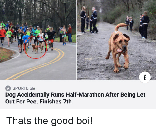 Good, Boi, and Dog: SPORTbible  Dog Accidentally Runs Half-Marathon After Being Let  Out For Pee, Finishes 7th Thats the good boi!