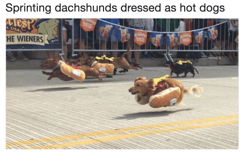 sprinting: Sprinting dachshunds dressed as hot dogs  USA  HE WIENERS