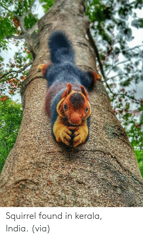 Found: Squirrel found in kerala, India. (via)