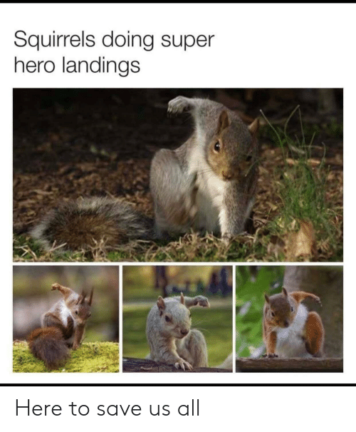 squirrels: Squirrels doing super  hero landings Here to save us all