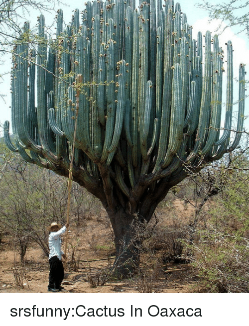 Tumblr, Blog, and Http: srsfunny:Cactus In Oaxaca