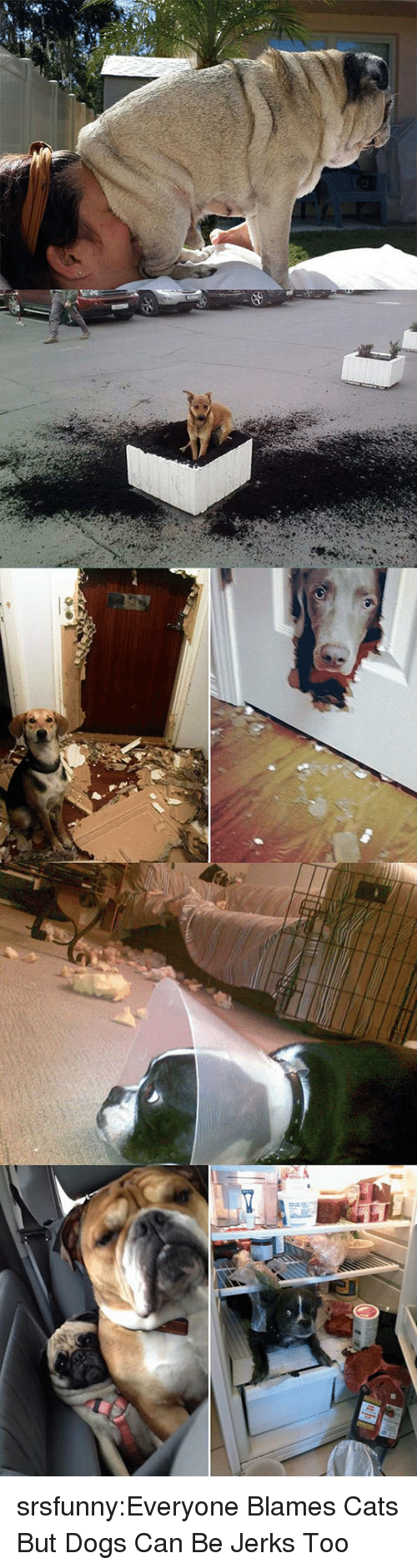 Jerks: srsfunny:Everyone Blames Cats But Dogs Can Be Jerks Too