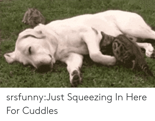 Tumblr, Blog, and Http: srsfunny:Just Squeezing In Here For Cuddles