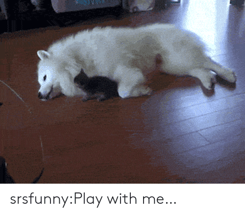 Tumblr, Blog, and Net: srsfunny:Play with me…