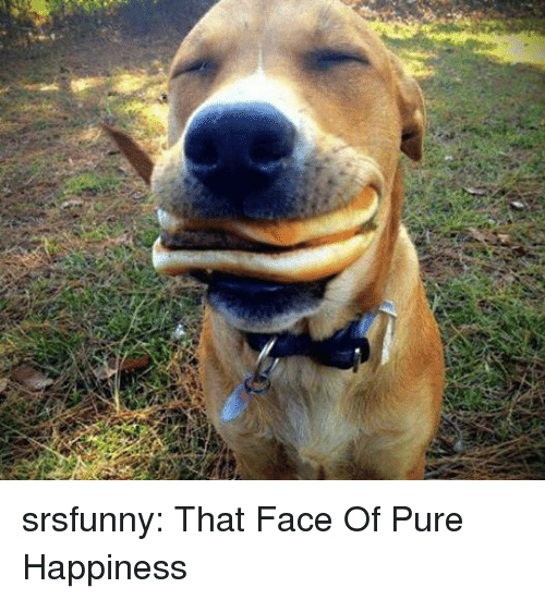 Pure Happiness: srsfunny:  That Face Of Pure Happiness