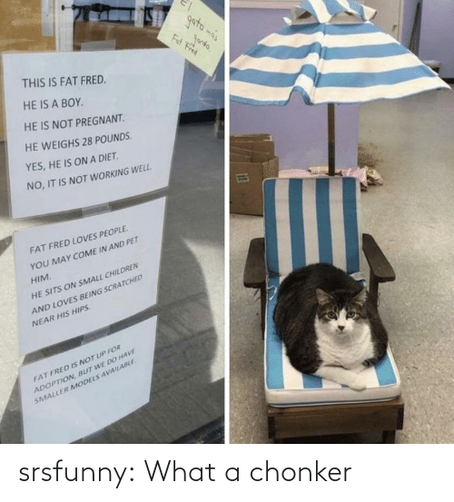Tumblr, Blog, and Net: srsfunny:  What a chonker