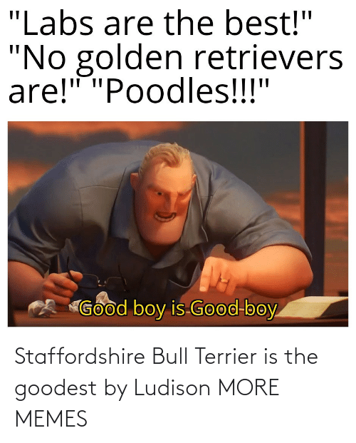 alt: Staffordshire Bull Terrier is the goodest by Ludison MORE MEMES