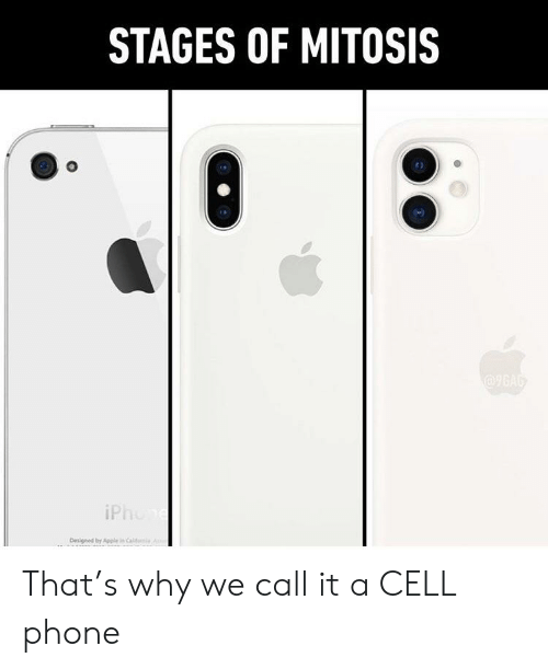 iphon: STAGES OF MITOSIS  @96AG  iPhon  Designed by Apple in Cal That's why we call it a CELL phone
