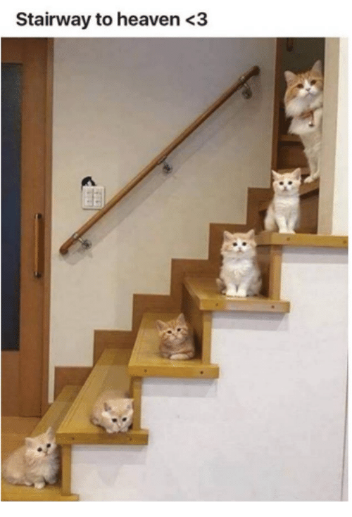 Heaven, Memes, and Stairway to Heaven: Stairway to heaven<3