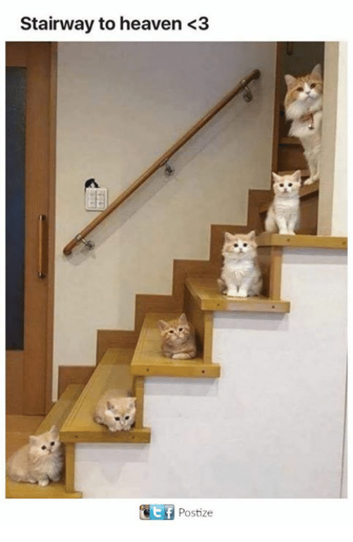 Heaven, Memes, and Stairway to Heaven: Stairway to heaven <3  Postize