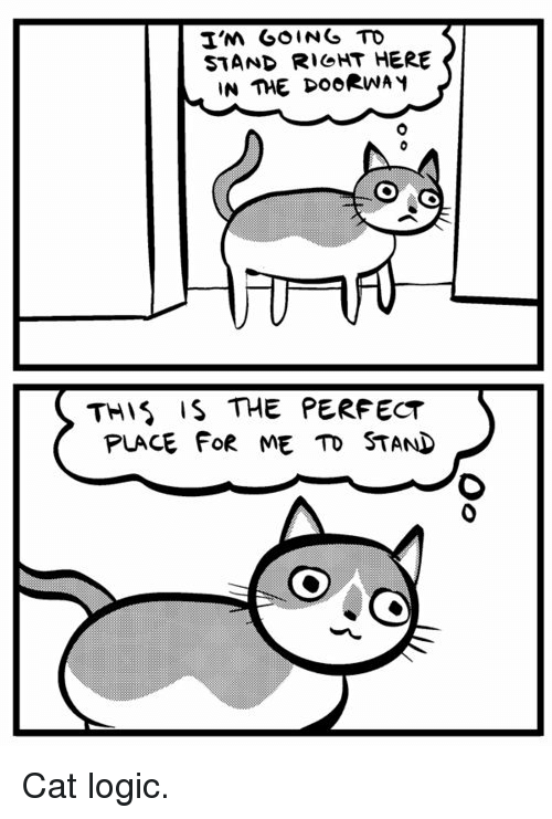 25 best memes about cat logic cat logic memes I'm Just Playing Meme logic cat and stand stand r cht here in the doorway this is the