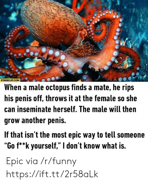 "Funny, Octopus, and Penis: STARECAT.COM  When a male octopus finds a mate, he rips  his penis off, throws it at the female so she  can inseminate herself. The male will then  grow another penis.  f that isn t the most epic way to tell someone  ""Go f**k yourself,"" I don't know what is. Epic via /r/funny https://ift.tt/2r58aLk"