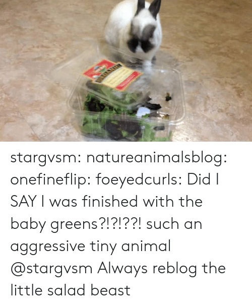 Tumblr, Animal, and Blog: stargvsm:  natureanimalsblog:  onefineflip: foeyedcurls:  Did I SAY I was finished with the baby greens?!?!??!  such an aggressive tiny animal   @stargvsm   Always reblog the little salad beast