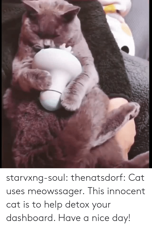 Tumblr, Blog, and Help: starvxng-soul: thenatsdorf: Cat uses meowssager. This innocent cat is to help detox your dashboard. Have a nice day!
